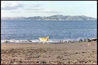 Happt dog playing at the beach